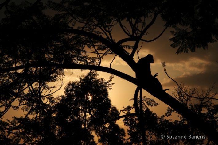 Mooie zonsondergang Uganda