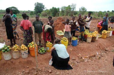 Mango's onderweg in Zambia